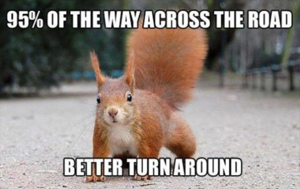 the-squirrel-crossing-the-road